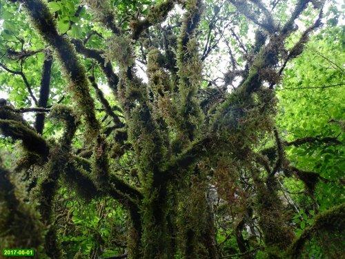Инспекция Экологической Вахты в Гуамке и Мезмае в связи с нашествием самшитовой огнёвки